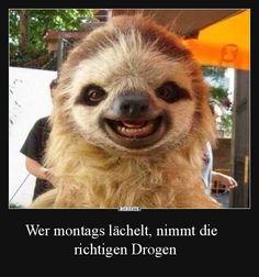 Wer montags lächelt, nimmt die richtigen Drogen.. | Lustige Bilder, Sprüche, Witze, echt lustig