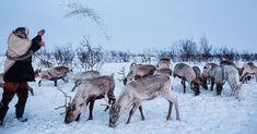 The indigenous Sami