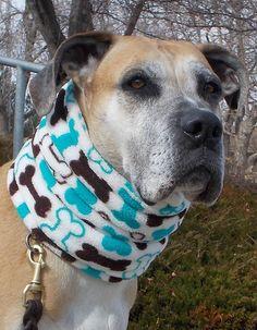 Fuzzy dog neck warmers by BellaTAZ, $19.95