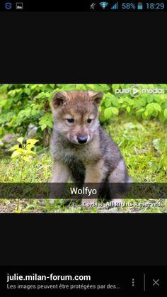 Wolfyo