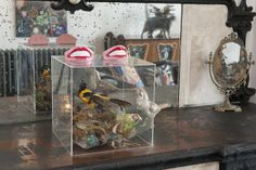 Wealden Times   House   Promenade Paradise - Stuffed birds and hilarious harmonicas adorn the living room