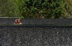 A map of the best contemporary landscape architecture projects from around the world. Pool Water Features, Water Walls, Strip, Contemporary Landscape, Small Gardens, Cool, Landscape Architecture, Wall Design, Railroad Tracks