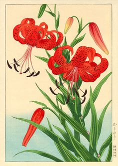 Original Japanese Woodblock print by Hodo : Lot 42 My paternal grandmother had these in her yard. Art Floral Japonais, Art Japonais, Asian Flowers, Japanese Flowers, Japanese Art Styles, Japanese Prints, Botanical Drawings, Botanical Prints, Tiger Lily Flowers
