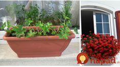 Moja rada pre bujaré kvitnutie muškátov: Nestojí to ani cent a funguje mi to už celé roky – kvitnú až do prvých mrazov! Garden Inspiration, Planter Pots, Gardening, Garten, Lawn And Garden, Horticulture