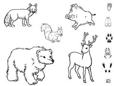 Arctic Animals, Forest Animals, Coloring For Kids, Coloring Pages, Feeding Birds In Winter, Animal Tracks, Exploration, Animal Activities, Nature Study