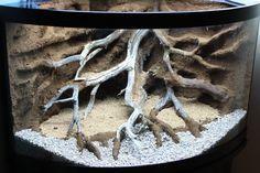 amazing tree roots background