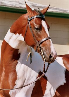 I love this horse!!