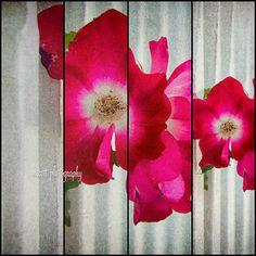 Pink Flowers Abstract Nature Photography by MScottPhotography