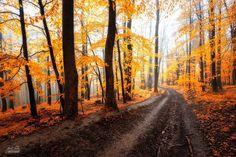 http://www.boredpanda.com/autumn-forests-photography-janek-sedlar/?utm_source=facebook