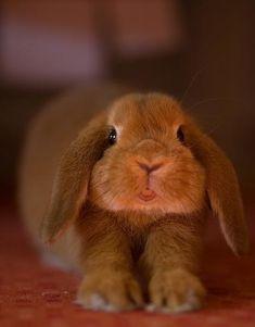 Bunny (: