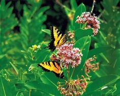 How to create a butterfly garden in your own backyard gardening-ideas