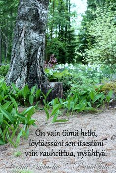 RunoTalo: Voimakortit viikolle 49 Affirmation Cards, Spiritual Path, Be Kind To Yourself, Affirmations, Spirituality, In This Moment, Words, Plants, Buddhism