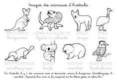 Coloriage à imprimer : Imagier des animaux d'Australie
