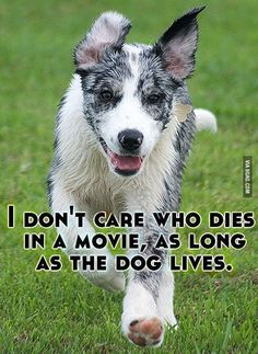 I don't care who dies in a movie, as long as the dog lives: I fully agree on that one!!