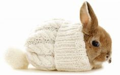 J'ai froid moi !!!