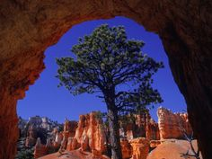 This image uses framing because the edge of the rock surrounds the tree and draws your eye to it  A. Schaefer