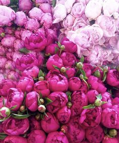 It's a peony kinda day! Beautiful Flower Arrangements, Fresh Flowers, Pretty In Pink, Floral Arrangements, Beautiful Flowers, Succulent Planter Diy, Succulents, My Flower, Flower Power
