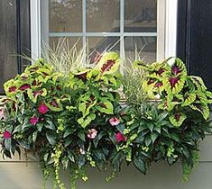 Side Planting - Products - Window Box Planters