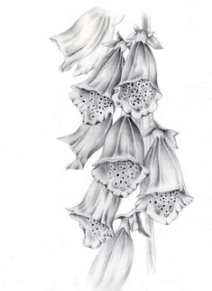 Rocky Mountain Society of Botanical Artists: March 2012