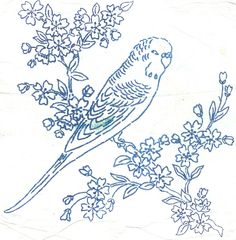 budgie | by pinky and boo