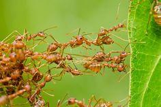 Zrzaví nebo černí, na barvě vůbec nezáleží. Mravenci nám dokážou pořádně znepříjemnit život. A pokud se jich včas nezbavíte, mohou zdevastovat celou vaši zahradu. Okusují listy i kořínky rostlin, a ty tak umírají. Neničí ale jen naši úrodu. Při stavbě svého hnízda často poddolují cesty, kameny, terasy i dlaždice, které se pak uvolňují nebo poklesnou.