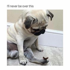 Your daily dose of cuteness: pug meets butterfly. #pugs #cute #pet