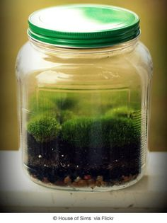 The popularity of terrariums has also spawned a DIY approach, and homemade terrariums also carry the environmentally-friendly mantle of reus...