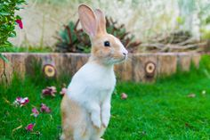 """I did """"that cute pose thing!"""" Now, where is my carrot? — Beau  #Rabbit"""
