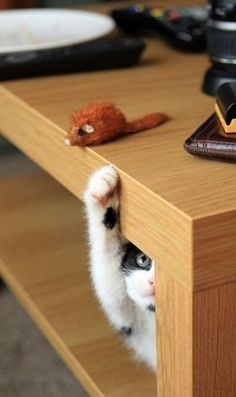 I know my mousey is up there.