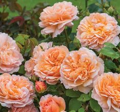 -- www.gardenia.net