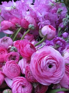 Ranunculus... I need this all over our yard. Beautiful!