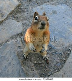 A squirrel standing on it's hind legs and looking up at the camera. Alberta, Canada. by David P. Lewis, via ShutterStock