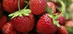 Erdbeer-Smoothie Rezept mit Naturjoghurt