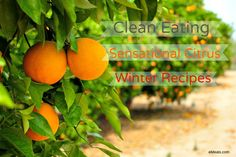 Clean Eating Citrus Recipes to help maximize winter citrus foods! #cleaneating #citrus #recipes
