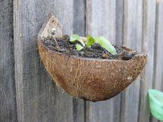 Coconut shell plant pot by sustainableecho, via Flickr