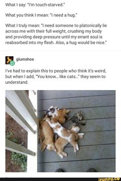 FunSubstance - Funny pics, memes and trending stories Animal Memes, Funny Animals, Cute Animals, Tumblr Stuff, Funny Tumblr Posts, I Need A Hug, Haha, Mbti, Funny Cute