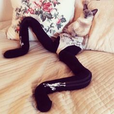 Meowtfit-Cats-wearing-tights-8