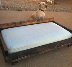 I made this dog bed for our yellow lab, Shamrock, after seeing something similar on Pinterest. I used a crib mattress, and added casters to make it easier to move. Shamrock is very proud.