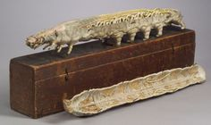 19th century papier-mâché anatomical model of a caterpillar, with numerous removable tiers revealing internal organs