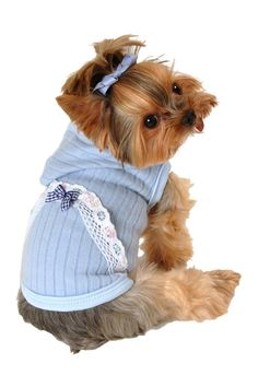 Get your little pooch spring-ready in this adorable lace eyelet hoodie!