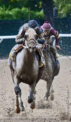 ˚Horse Racing - Belmont Racetrack, New York