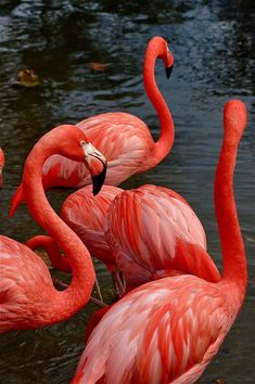A woman of Noble character, who can find? She is far more precious than rubies Tier Wallpaper, Flamingo Wallpaper, Ocean Wallpaper, Flamingo Art, Summer Wallpaper, Cute Wallpaper Backgrounds, Animal Wallpaper, Nature Wallpaper, Cute Wallpapers