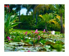 Botanical Garden Naples, FL