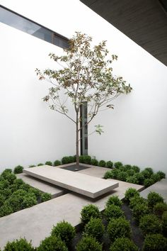 Small courtyard with tree and concrete slabs and bench. The Casa Ovalle Salinas by Jorge Figueroa Asociados.
