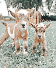 Baby Farm Animals, Baby Animals Super Cute, Cute Baby Dogs, Cute Dogs And Puppies, Cute Little Animals, Animals And Pets, Wild Animals Photos, Cute Wild Animals, Baby Animals Pictures