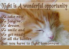 <3 Goodnight all. Sweet dreams!