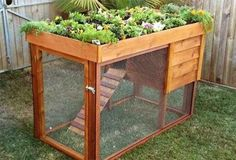 Bunny cage or chicken coop with a garden on top!