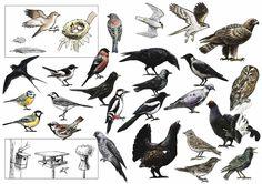 fugler - Google-søk