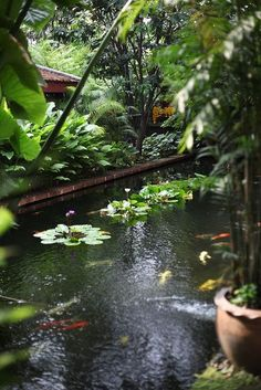 Pool at Jim Thompson House Museum, Bangkok. Landscape Design, Garden Design, Landscape Plans, Jim Thompson House, Carpe Koi, Pond Waterfall, Asian Garden, Fish Ponds, Water Features In The Garden