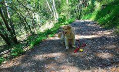 Dog at Sibley Volcanic Regional Preserve